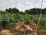 和平段超值美農地 (CS86925)