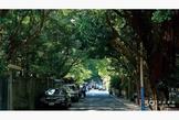 青田美寓坐擁台北市中心擁抱整座森林