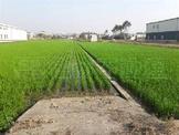中興新村美農地 (JS39954)