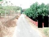 高樹鄉開心農場(4分地)