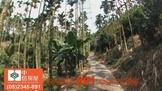南投縣集集鎮 林地 約4甲地稀有農地清淨無空氣汙染-891