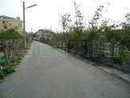 白沙國小旁田 (RS07903)