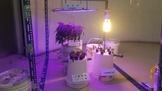 工程師瞞妻打造大麻花園 檢測酸鹼值好專業