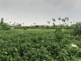 里港市中心都市計畫農地