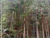 南庄休閒林地