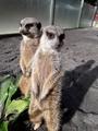 台北動物園和花蓮兆豐農場結親 10餘隻動物搬新家