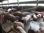 防非洲豬瘟 22日起帶肉品入境日本最高罰百萬日圓
